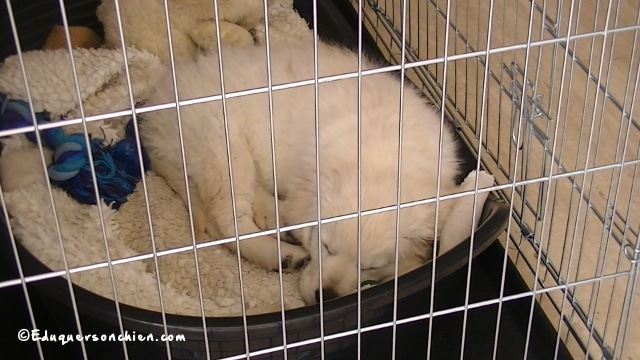 pourquoi utiliser une cage pour chien
